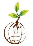 Globe plant Royalty Free Stock Photo