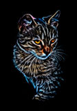 Glowing cat portrait Royalty Free Stock Image