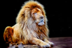 Glowing lion portrait Royalty Free Stock Images