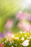 Glowing Spring Flowers Stock Images