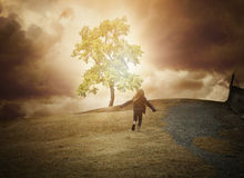 Glowing Tree of Hope on Hill Royalty Free Stock Photos