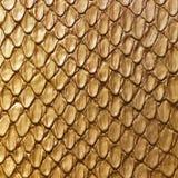 Gold snake skin Royalty Free Stock Photo