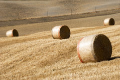 Golden hay bales Stock Photography