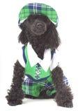 Golf Dog Royalty Free Stock Photo