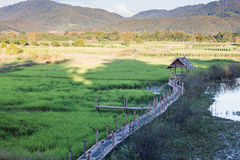 Grünes Reisfeld in Chiang Rai, Thailand Stockfoto