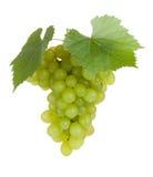 Grape fruits Stock Photo