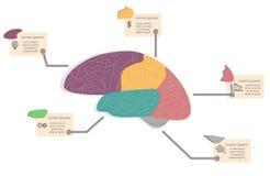 Graphique d'infos de diagramme de cerveau Photographie stock