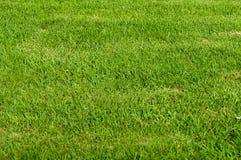 Grass Field Stock Image
