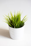 grass in a flower pot Stock Images