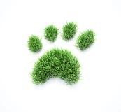 Grass pet paws Royalty Free Stock Image