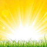 Grass on the Sunshine Rays Royalty Free Stock Photos