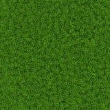 Grass texture Stock Image