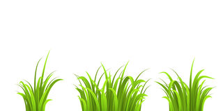 Grass three bushes Royalty Free Stock Images