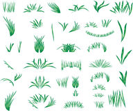The grass Royalty Free Stock Images