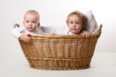 Great friends in basket Stock Photos