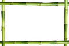 Green bamboo stick frame Stock Image