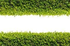 Green bush frame Stock Photography