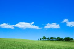 Green field 4 Royalty Free Stock Image