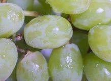 Green Grapes Stock Photo