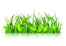 Green Grass and Leaves Stock Photography