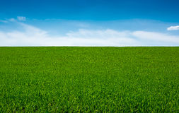 Green grass and sky, background Stock Photography