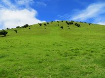 Green Hill with Blue Sky Royalty Free Stock Photography