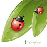 Green leaves design with ladybug, eps-10 Royalty Free Stock Photo