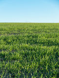 Green meadow summer Royalty Free Stock Photography