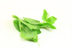 Green Pea Shoot Royalty Free Stock Images