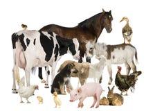 Groep de dieren van het Landbouwbedrijf Royalty-vrije Stock Fotografie