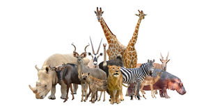 Group of africa animals Royalty Free Stock Images