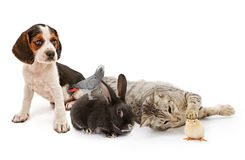 Group of common household pets Stock Photo