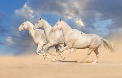 Group of horse run Stock Images