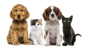 Group of kittens and dogs Stock Image