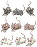 A group of mice Stock Photos