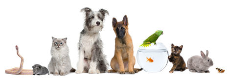 Group of pets Stock Images