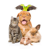 Group of pets together in front Royalty Free Stock Images