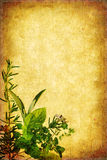 Grunge Herb Background Stock Images