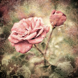 Grunge texture with floral background in vintage style. Romantic Royalty Free Stock Photo