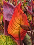Gymea Lilly Leaves Royalty Free Stock Photo