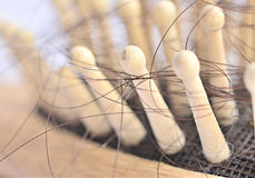 Hair loss problem Stock Photography