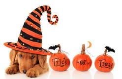 Halloween-puppy Stock Foto's