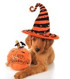 Halloween-puppy Stock Afbeelding