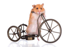 Hamster on a bicycle Stock Photo