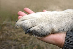 Hand and Paw Stock Photos