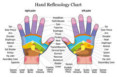 Hand reflexology chart description Stock Photo