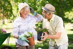 Happy senior couple gardening Stock Images