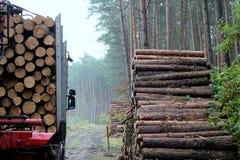 Haulage timber Stock Image