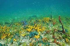 Havsbotten med färgrikt undervattens- marin- liv Royaltyfri Foto