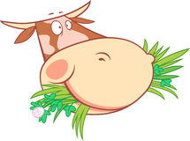Head of a chewing cow Stock Images